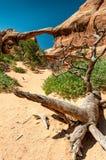 在一块死的木头的双重O曲拱后 免版税库存照片