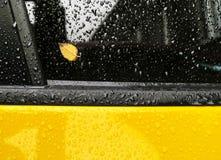 在一块湿汽车玻璃的黄色叶子 图库摄影