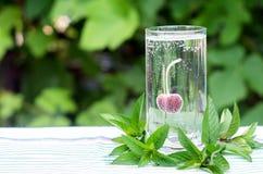 在一块玻璃的成熟红色樱桃与用泡影盖的苏打 库存照片