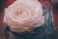 在一块玻璃的白色玫瑰在餐馆的一张桌上 图库摄影