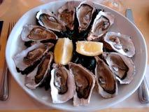 在一块白色板材的新鲜的牡蛎 免版税库存照片