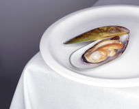 在一块白色板材的淡菜 免版税库存照片