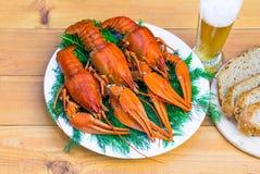 在一块白色板材的煮沸的红色小龙虾用在木背景的绿色茴香 库存图片