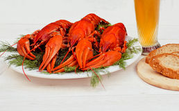 在一块白色板材的煮沸的红色小龙虾用在白色木背景的绿色茴香 图库摄影