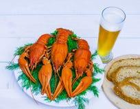 在一块白色板材的煮沸的红色小龙虾用在白色木背景的绿色茴香 免版税库存图片