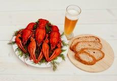 在一块白色板材的煮沸的红色小龙虾用在白色木背景的绿色茴香 库存照片