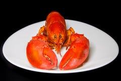 在一块白色板材的红色龙虾 库存图片