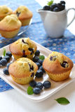 在一块白色板材的蓝莓松饼 免版税图库摄影