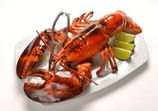 在一块白色板材的龙虾 免版税库存图片