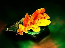 在一块石头下落的叶子用流动在它附近的水 秋天的橙黄标志 库存照片