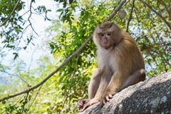 在一块石头的猴子在泰国,亚洲 免版税库存照片