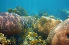在一块石珊瑚礁石的水下的风景 库存照片