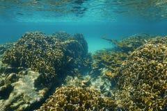在一块石珊瑚礁石的水下的风景 图库摄影