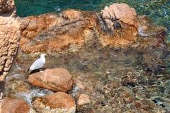 在一块石头的海鸥在海滩 库存图片