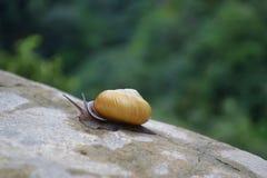 在一块石头的蜗牛在森林里 免版税库存照片