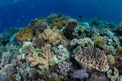 在一块礁石的生物多样性在印度尼西亚 库存图片