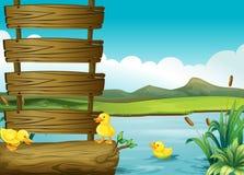 在一块空的牌旁边的鸭子在河 免版税图库摄影