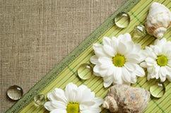 在一块竹席子和帆布的雏菊 库存照片