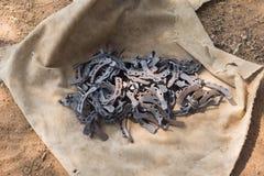 在一块篷布的水牛城鞋子在Namunasamudran附近 免版税库存照片