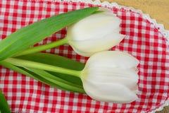 在一块红色白色方格的小垫布的白色郁金香 库存图片