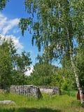 在一块绿色森林沼地中间的石头废墟有高年轻桦树的 库存图片