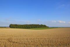 在一块被收获的麦田旁边的一个小森林地 免版税库存图片