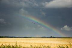 在一块金黄麦田的彩虹 库存图片