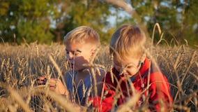 在一块麦田的儿童立场 男孩握麦子的耳朵 影视素材