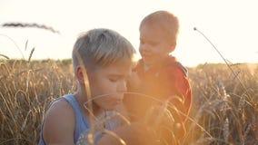 在一块麦田的儿童立场 男孩握麦子的耳朵 股票视频