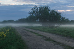 在一块麦田的土路在一个有雾的早晨 免版税库存照片