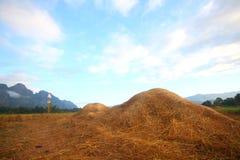 在一块麦田的干草堆秸杆在收获以后 免版税库存照片