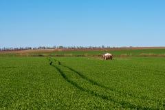 在一块麦田的拖拉机喷洒的杀虫剂 免版税库存图片