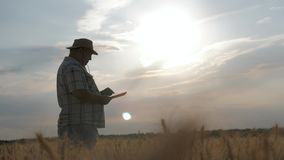 在一块麦田的资深农夫身分使用在农业的现代技术在日落 聪明种田,使用现代 股票录像
