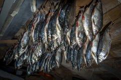 在一块黑暗的木天花板的背景的干鱼 图库摄影