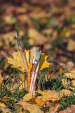 在一块玻璃的刷子与黄色枫叶 免版税图库摄影
