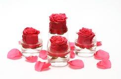 在一块玻璃的四朵玫瑰在瓣中 免版税图库摄影
