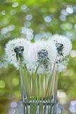 在一块玻璃的白色蓬松蒲公英在绿色背景迷离,垂直 免版税图库摄影
