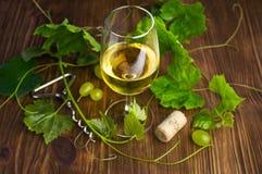在一块玻璃的白葡萄酒与藤 库存图片