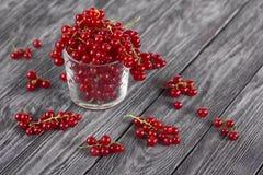 在一块玻璃的红浆果在黑背景 免版税库存照片