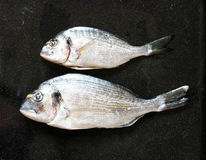 在一块黑石头的鲜鱼Orata与菜 免版税库存照片