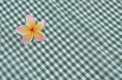 在一块绿色方格的布料的赤素馨花花 库存图片
