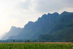 在一块绿色烟草田后的蓝色小山 免版税库存图片