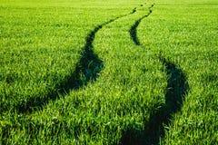 在一块绿色麦田的路 免版税库存照片