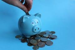 在一堆金钱的贪心蓝色猪身分和手投入金钱  免版税库存图片