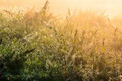 在一堆长得太大的杂草的美丽的露水在一场神秘的雾 免版税库存照片