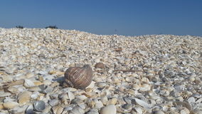 在一处海壳风景的蜗牛壳 免版税库存图片