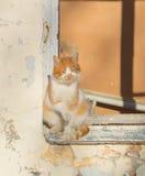 在一夏天` s天一只野生猫取暖在阳光下坐在一个被放弃的房子的窗口里 库存图片