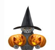 在一套服装的逗人喜爱的猫用两个halloweens南瓜 图库摄影
