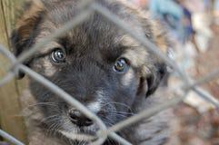 在一家动物庇护所的一条狗 免版税库存图片