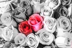 在一家巴黎人花店的美丽的红色两玫瑰花 库存照片